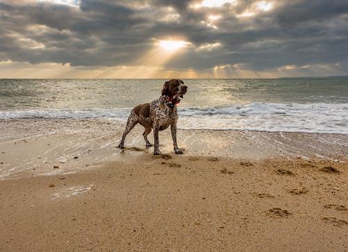 bournemouth england unitedkingdom gb beach dorset dorsetuk vibrant sea seascape dscrx100m3 winter nature sunlight portrait sand zeiss anthonywhitesphotography