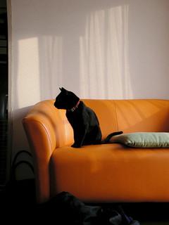 On a sofa | by taiyofj