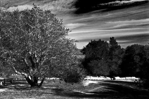 trees blackandwhite bw 15fav santacruz 510fav interestingness vision imagination williamblake interestingness126 i500 123bw delaveagapark