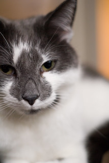 Cat Shots   by ericrichardson