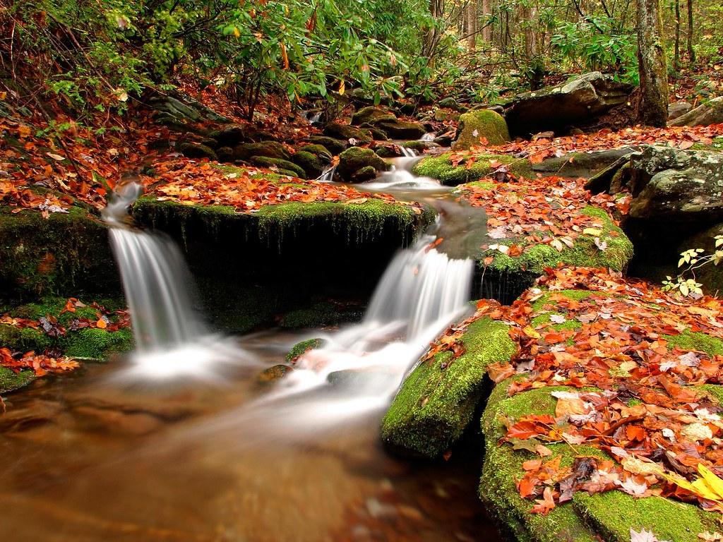 Automne Fond Ecran Ruisseau Foret Patrice Witte Flickr