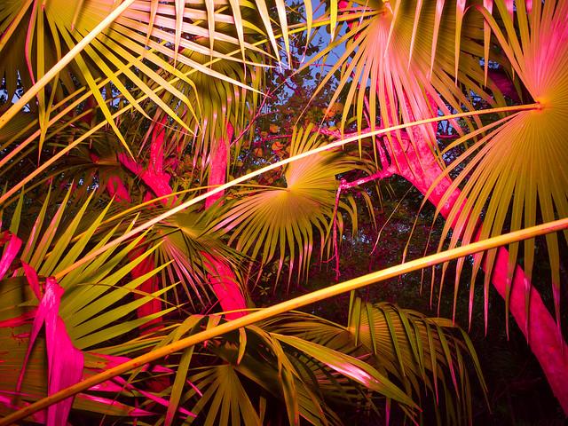 Jungle, Mexico, Tulum,2016