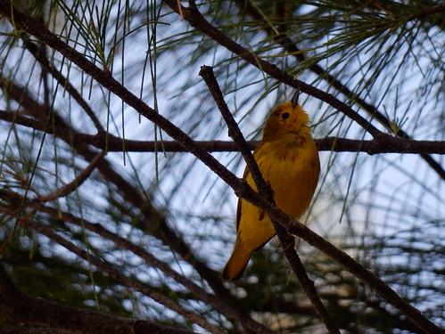 Puerto Morelos - bird