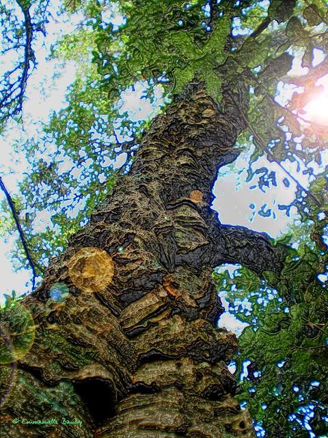 Auprès de mon arbre...  -  Near my tree...