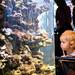 Aquarium in Gdynia 2010