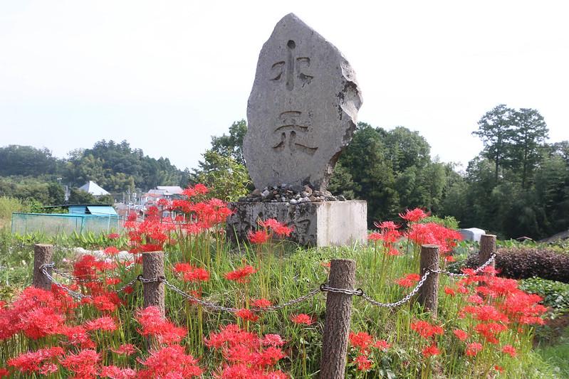 2014-09-23_00055_巾着田.jpg