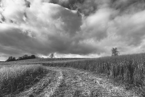 sky blackandwhite monochrome field clouds blackwhite pennsylvania farm farmland lancastercounty farmlife pequea