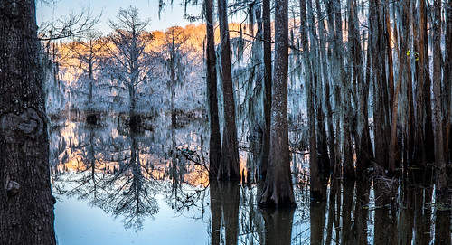 park travel camping trees sunset vacation reflection mill nature moss pond texas state adventure spanish cypress caddolake