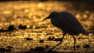 Bokehlicious egret | by Awais.M (1M views+ Views Thank you )