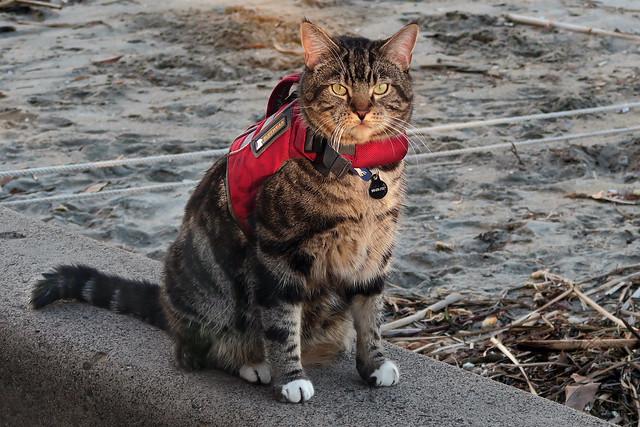 Life Jacket Cat #2