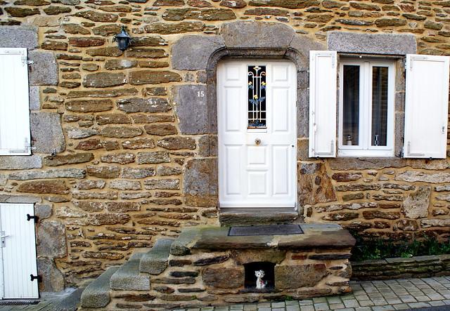 Door and cat