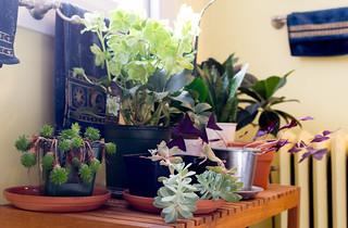 Bathroom Plants | by bellemarematt