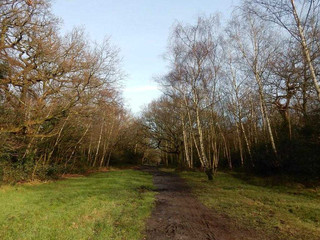 A ride Epping Forest Leytonstone to Loughton