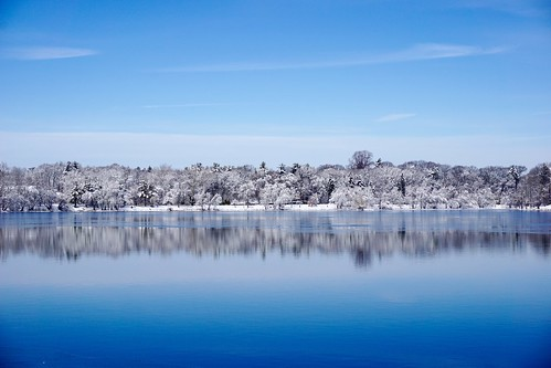 blue trees winter white snow reflection ice nature water boston landscape frozen pond massachusetts newengland minimal clean clear simple minimalist pw waterscape emeraldnecklace jamaicapond winterstormlexi