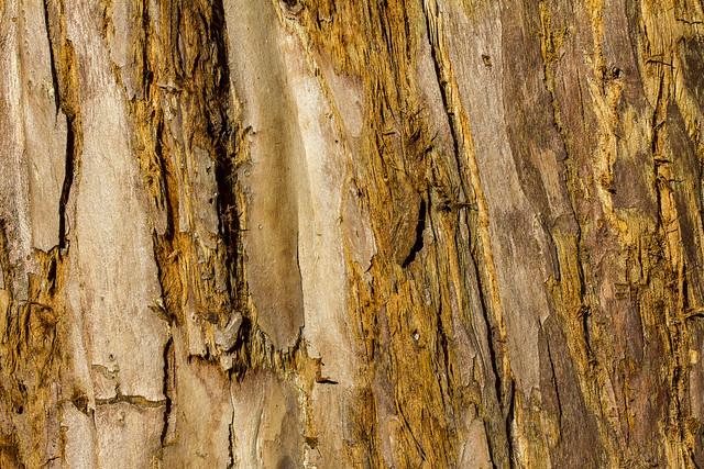 15/2016 - Redwood Bark