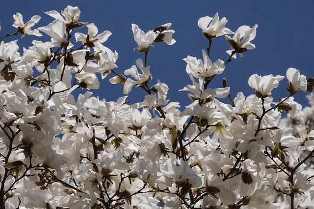 土, 2016-03-26 13:50 - Brooklyn Botanic Garden