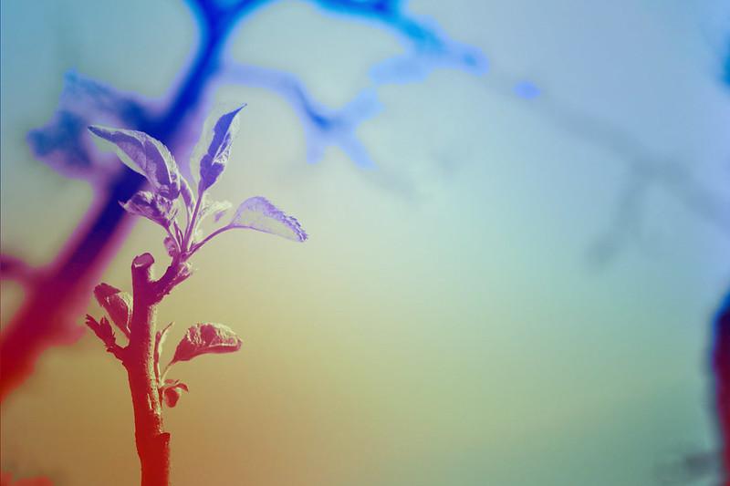 blur-dreamy-texture-texturepalace-15