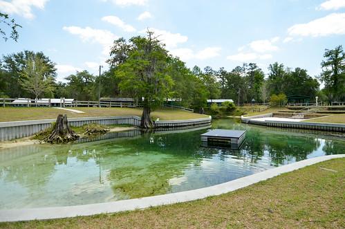 water spring florida springs hartsprings suwanneeriver