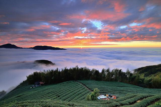 大崙山~茶園火燒雲海~ Tea farm Sunset
