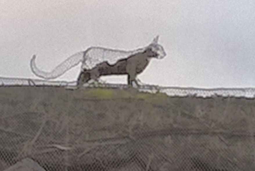 Half-thatched cat on thatched roof SWC Walk Cheddington to Leighton Buzzard