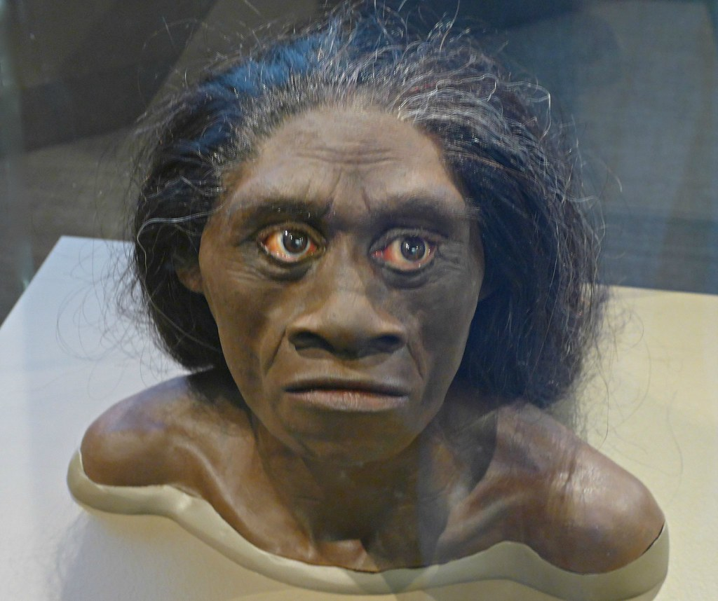 Homo floresiensis head   Remains of the most recently