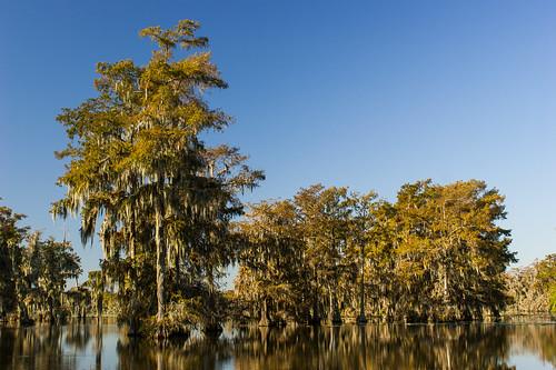 trees usa lake sunrise pond louisiana atchafalayabasin bayou cedar swamp spanishmoss wetlands cypress riverdelta lakemartin baldcypress