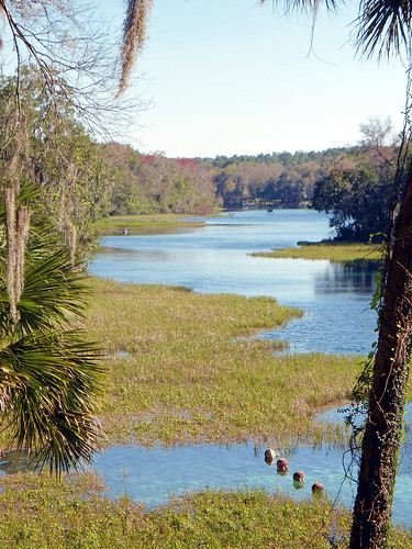 water river landscape scenery florida springs marsh dunnellon