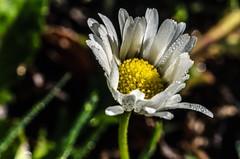 La delicadeza de la flor