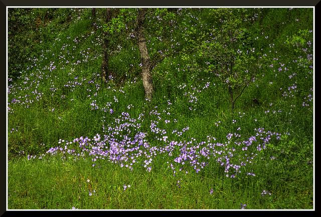 Flowers_3903d