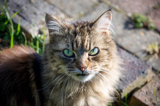 Grumpy Puss