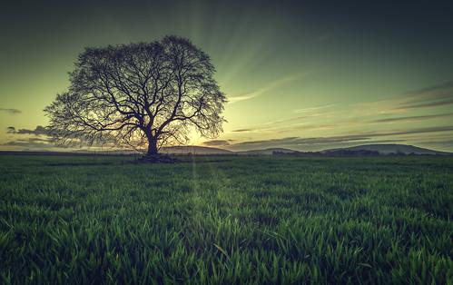 old sunset sun tree landscape scotland nikon aberdeenshire lone rays 20mm rayne d610 18g