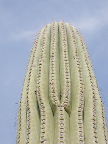 Jardin Botanico Helia Bravo Hollis - cactus - 1