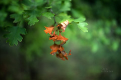 Leaf off