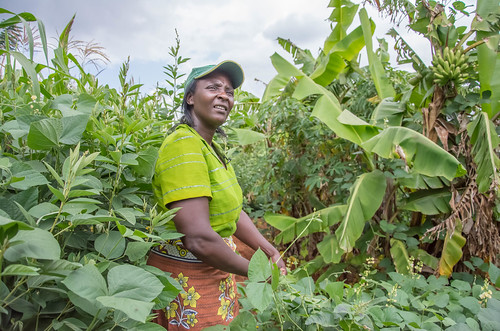 Putting farmers at the center | by Alliance for a Green Revolution in Africa