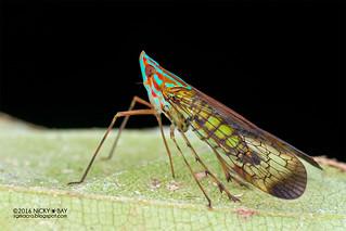 False lanternfly (Dictyopharidae) - DSC_8067