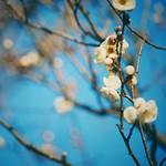 梅  思ったよりも良い天気  けど「さ」と「む」と「い」という言葉がどうしても出てしまう😅   #梅 #ウメ #花 #flower #はなまっぷ #loves_flowers_ #landscape #風景 #自然 #nature #空 #sky #青空 #bluesky #igersjp #team_jp #loves_nippon #lovers_nippon #icu_japan #photo #写真