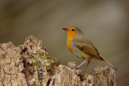 wild bird nature woodland suffolk wildlife lakes reserve trust damp lackford