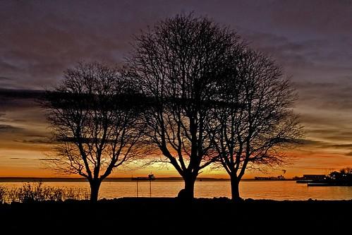 ocean tree norway sunrise geotagged norge norwegen gas oil noruega scandinavia refinery tanker norvegia oslofjord norvege vestfold norja åsgårdstrand badepark norveska asgardstrand norvegienne p1f1 superaplus aplusphoto godispaintingwithcolors solsnu