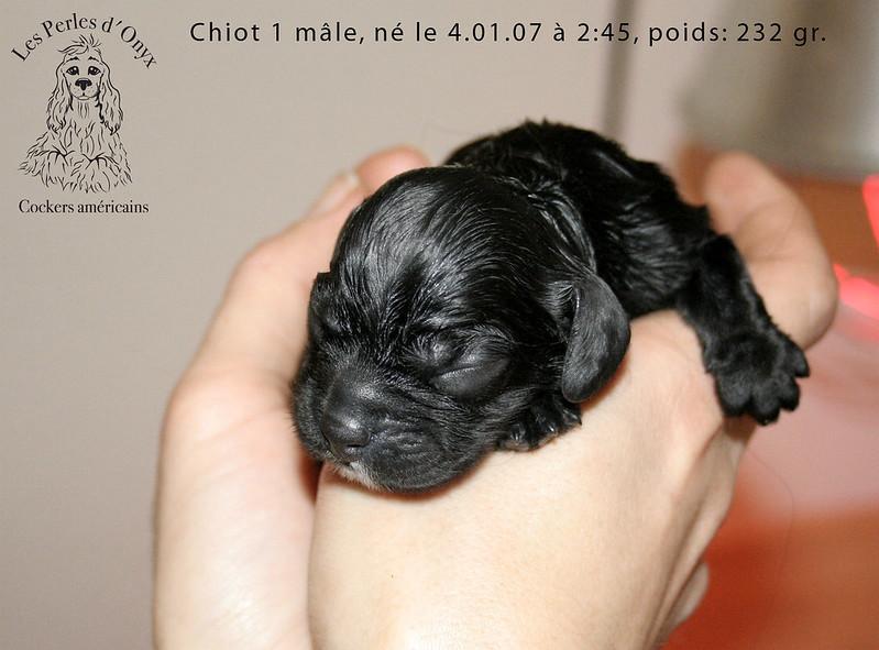 Chiot 1