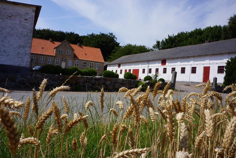 Tjoernbjerg-Stuehus-juli-2014 (19)