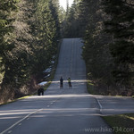 Black Bear on Going-to-the-Sun Road