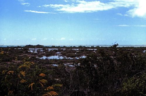 dia analogfilm scan 1980s 1980er slide diapositivfilm kleinbild kbfilm analog 35mm canoscan8800f contax137md bahamas westindischeinseln amerika karibik mittelamerika thebahamas nordamerika 1989 insel longisland landschaft natur mangroven mangrovebush rüdigerstehn