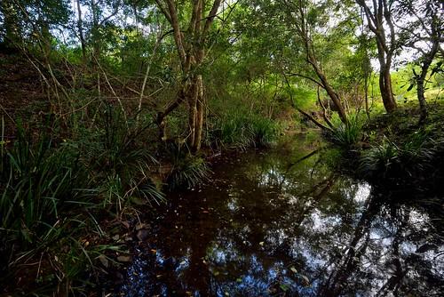 creek landscape australia newsouthwales aus firefly waukivory nikon1635mmf4 nikond750