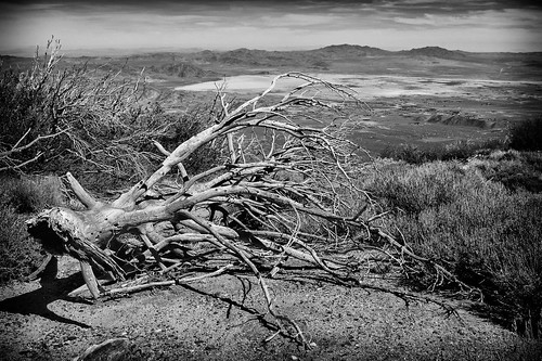 california travel blackandwhite tree weather clouds landscape photography us nikon unitedstates lucernevalley sanbernardinocounty d7100