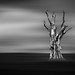 The Tree by Acero666