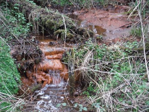 Iron-Rich Stream, Flitwick Moor SWC Walk 231 Flitwick Circular