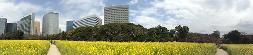 panorama japan gardens garden tokyo japanesegarden rape raps hamarikyu rapeseed hamarikyugardens