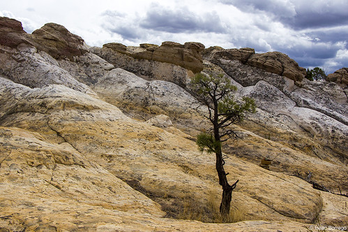 uploadedviaflickrqcom mesa tree rocks clouds elmorro nationalmonument grants newmexico canonrebelt4i desert unitedstates america usa nationalparks nationalparksystem nps findyourpark landofenchantment southwest departmentofinterior publiclands