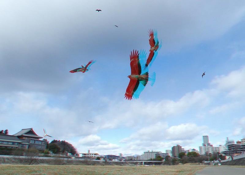 black kites, anaglyph