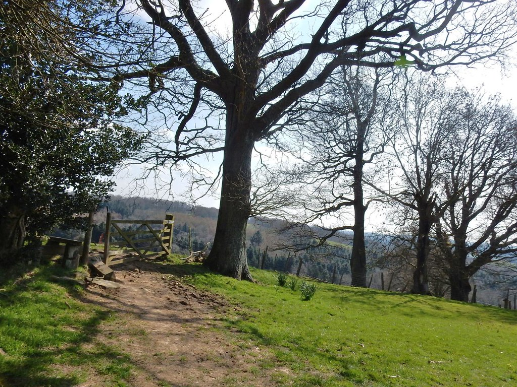 Ridge, trees, gate. Ashurst to Eridge
